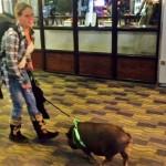 Quando os porcos eram os cães de rua de Ibitira