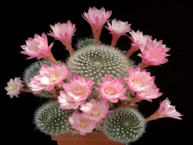 Lembrança em flor