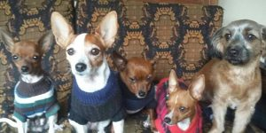Notícias do Bem: casinha para cachorro de rua, projeto de português para estrangeiros e muito amor